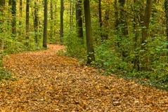 Una foresta dell'acero e della quercia Immagine Stock Libera da Diritti