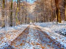 Una foresta della depressione del percorso con le foglie muggisce la prima neve Immagine Stock