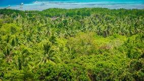 Una foresta della palma nell'area verde con la spiaggia del mare come vista del fondo dal mare superiore fotografia stock