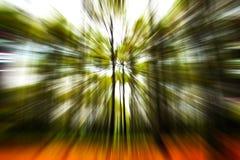 Una foresta di conifere di zummare Fotografie Stock Libere da Diritti