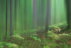 Una foresta di sogno immagini stock