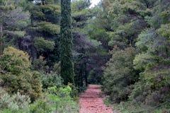 Una foresta favolosa con i grandi alberi verdi in Europa meravigliosa fotografia stock libera da diritti