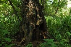 In una foresta favolosa della reliquia fotografia stock