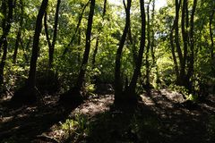 In una foresta favolosa della reliquia fotografie stock libere da diritti