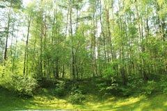 Una foresta in Lituania Immagini Stock Libere da Diritti