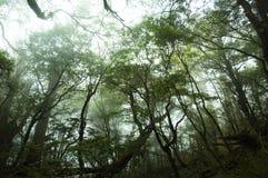 Una foresta nebbiosa Fotografia Stock Libera da Diritti