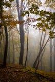 Una foresta nebbiosa nelle montagne Fotografia Stock
