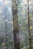 Una foresta nella regione di Mosca Immagini Stock