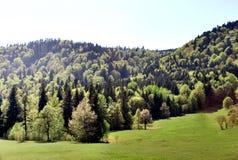 Una foresta nelle montagne Fotografia Stock