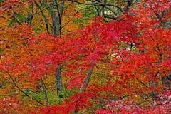 Una foresta nelle montagne fumose è viva con colore Fotografia Stock Libera da Diritti