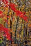 Una foresta nelle montagne fumose è viva con colore Immagine Stock Libera da Diritti