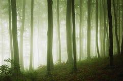 Una foresta verde con nebbia alla sera fotografia stock
