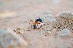 Una formica sulla terra Fotografia Stock Libera da Diritti