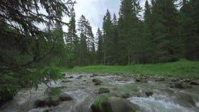 Una forte corrente degli scorrimenti dell'acqua fra i massi della natura ed in mezzo ai pini verdi stock footage