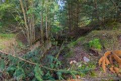 Una fossa invasa circondata dagli alberi aridi Foresta densa Fotografie Stock Libere da Diritti
