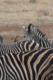 Una foto astratta della zebra tre fotografie stock libere da diritti
