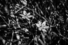 Una foto in bianco e nero dei fiori fragili sui precedenti strutturati immagine stock libera da diritti