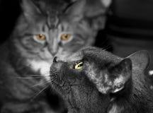 Una foto in bianco e nero di due gatti Fotografie Stock Libere da Diritti
