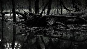 Una foto blanco y negro tiene porción de árbol como como un bosque Foto de archivo