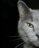 Una foto de mi gato, Óscar Su media cara hace esto interesante Fotografía de archivo