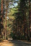Una foto de un rastro del bosque entre los árboles de pino Imagen de archivo libre de regalías