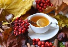 Una foto del otoño con una taza de té, de hojas coloridas, de bayas de la ceniza, de castañas, de una bufanda caliente y de palil Fotografía de archivo