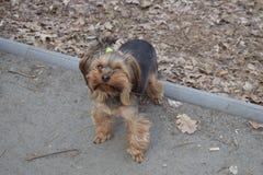 Una foto del perro en el ¿Ð°Ñ€ÐºÐ? del ² Ð del ¾ баки Ð del  Ð del ¾ Ñ del 'Ð del ¾ Ñ del parque/ФРFotos de archivo libres de regalías