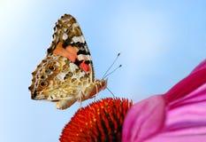 Una foto del primo piano di una farfalla (Venessa Cardui) Fotografie Stock Libere da Diritti