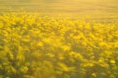 Una foto larga de la exposición de flores amarillas Foto de archivo libre de regalías