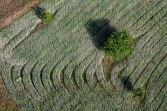 Una fotografía aérea en la salida del sol de un campo del grano que crece cerca de Goreme en Turquía Foto de archivo libre de regalías