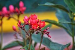 Una fotografía de una flor rosada fotos de archivo