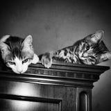 una fotografia in bianco e nero di due gattini sopra un guardaroba fotografia stock