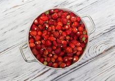 Una fresa deliciosa Bayas maduras Recogemos las fresas Imagen de archivo