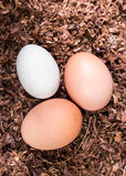 Una frizione di tre uova di recente fatte verticali Fotografia Stock Libera da Diritti