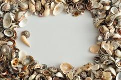 Una frontera con las conchas marinas Foto de archivo