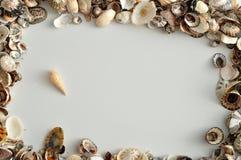 Una frontera con las conchas marinas Imagen de archivo