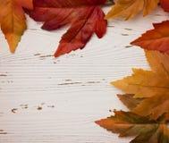 Una frontera de Autumn Leaves Foto de archivo libre de regalías
