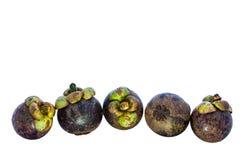Una frutta di cinque mangostani. Fotografie Stock