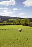 Una fuente de ingresos de la industria de la agricultura Imagenes de archivo