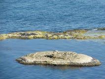 Una gaviota en el borde de una roca Foto de archivo libre de regalías