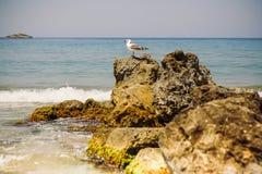 Una gaviota en las rocas por el mar Imagen de archivo