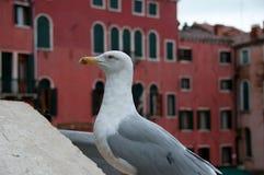 Una gaviota en Venecia Fotos de archivo