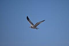 Una gaviota que disfruta de un día de verano Fotos de archivo