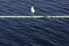 Una gaviota que se sienta en una cuerda Foto de archivo libre de regalías
