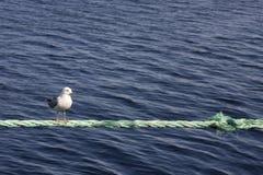 Una gaviota que se sienta en una cuerda Fotografía de archivo libre de regalías