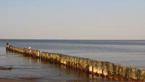 Una gaviota se relaja en rompeolas de madera de la playa almacen de metraje de vídeo