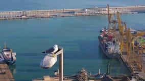 Una gaviota se sienta en una lámpara de calle contra la perspectiva de las fábricas, del mar, de las naves, de las fábricas y de  almacen de metraje de vídeo