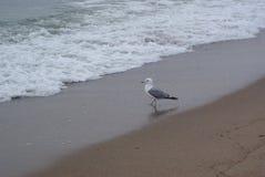 Una gaviota sola cerca del mar Foto de archivo