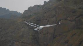 Una gaviota vuela contra la perspectiva de rocas costeras y del cielo cubierto almacen de video