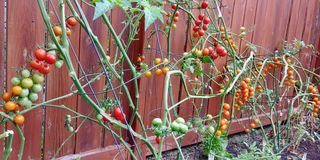 Una generosidad de las verduras frescas y deliciosas del patio trasero imagenes de archivo